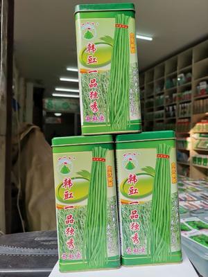 油青豆角种子  ≥95% 韩豇一品独秀
