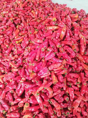 这是一张关于鲜泡椒 15~20cm 中辣 红色的产品图片