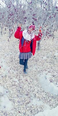 新疆维吾尔自治区巴音郭楞蒙古自治州若羌县若羌灰枣 统货
