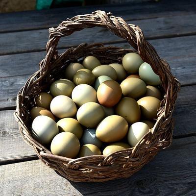 湖北省宜昌市夷陵区野鸡蛋  食用 散装 江苏野鸡蛋南京野鸡蛋