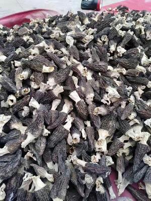 四川省成都市金堂县干羊肚菌 散装 1年以上