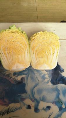 山东省滨州市沾化区金童玉女白菜 1~2斤 净菜