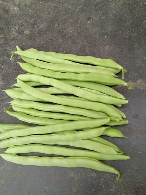 这是一张关于芸丰四季豆 20cm以上的产品图片