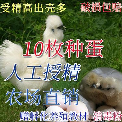 江西省吉安市泰和县乌骨鸡种蛋 孵化 箱装