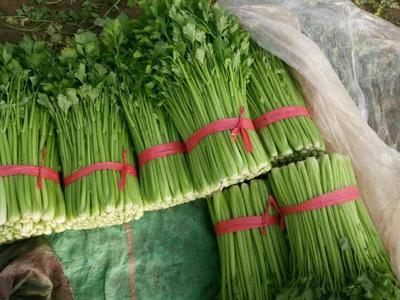 山东省聊城市东昌府区西芹 55~60cm 0.5~1.0斤 大棚种植
