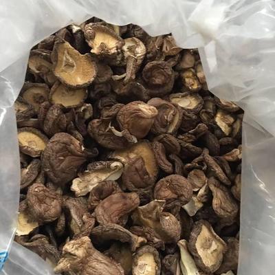 山东省德州市临邑县原木干香菇  散装 1年 高山种植