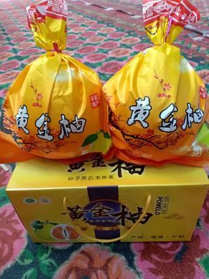 这是一张关于黄金柚 5斤以上的产品图片