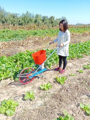 河南省开封市通许县播种机