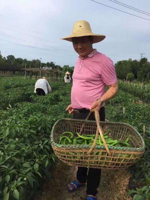 湖南省株洲市荷塘区长椒 混装通货 中辣 靑色