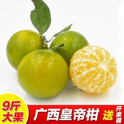 这是一张关于皇帝柑 6.5 - 7cm 1.5 - 2两的产品图片