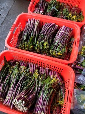 湖南省长沙市芙蓉区红菜苔 25~30cm