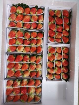这是一张关于甜查理草莓 20克以上的产品图片