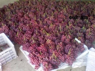 新疆维吾尔自治区石河子市石河子市美国红提 1.5- 2斤 10%以下 1次果