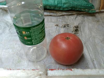 这是一张关于大红硬果 通货 大红 弧二以上的产品图片