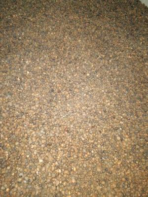 贵州省黔西南布依族苗族自治州兴义市油茶籽