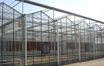 广东省深圳市龙岗区玻璃温室大棚