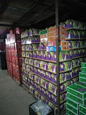 这是一张关于巨峰葡萄 1-1.5斤 5%以下 2次果的产品图片