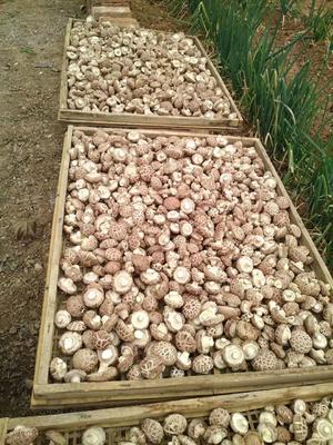 这是一张关于花菇干 袋装 半年的产品图片