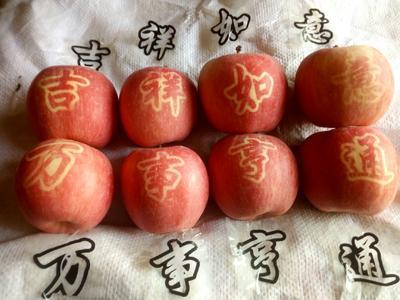 这是一张关于红富士苹果 纸袋 日晒面 75mm以下的产品图片