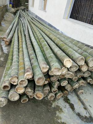这是一张关于毛竹的产品图片