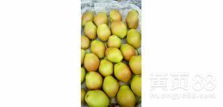 山西省运城市临猗县红香酥梨 60mm以上 200-250g