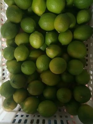 这是一张关于安岳柠檬 1 - 1.5两的产品图片