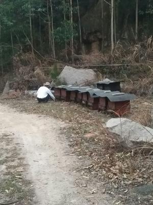 福建省漳州市漳浦县土蜂蜜 塑料瓶装 2年以上 98%