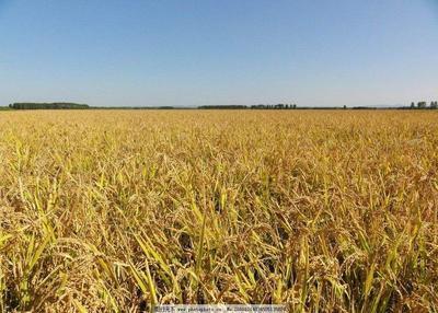 这是一张关于水田 出租 5年以下 100~500亩的产品图片