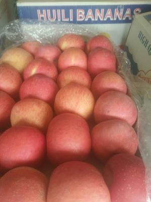 陕西省延安市宜川县红富士苹果 75mm以上 条红 纸袋