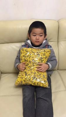 这是一张关于金丝黄菊苗的产品图片