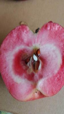 河南省郑州市中牟县红色之爱苹果70mm以上 全红 光果