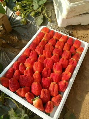 这是一张关于九九草莓 50克以上的产品图片