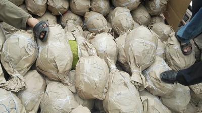 广西壮族自治区玉林市博白县泰国菠萝蜜 15斤以上