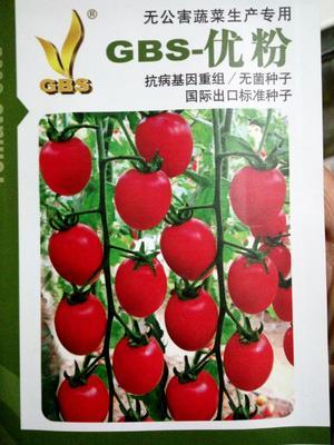 江苏省宿迁市沭阳县樱桃番茄种子 ≥99% 杂交种 ≥90%
