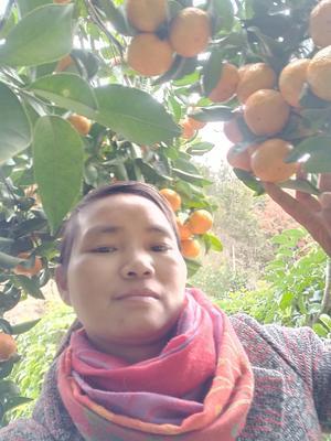 广东省梅州市梅县区沙糖桔 统货 1两以下