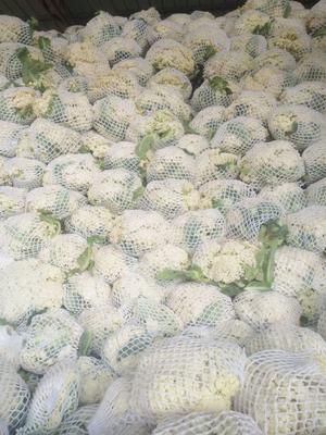 这是一张关于有机花菜  松散 的产品图片
