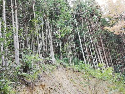 广东省广州市从化区杉木