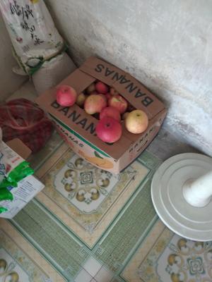 辽宁省葫芦岛市建昌县红富士苹果 110mm以上 全红 光果