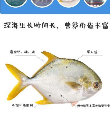 广西壮族自治区钦州市钦南区金鲳鱼 人工养殖 0.5公斤以下