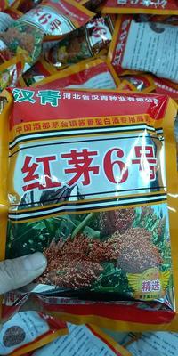 河北省沧州市青县红茅六号高粱种子  ≥90% 杂交种