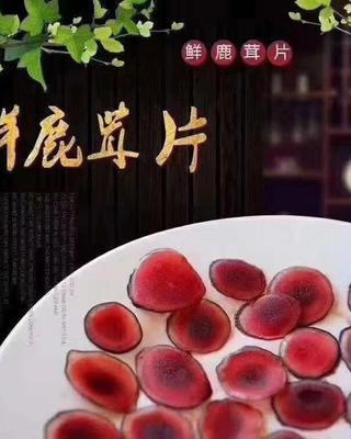 吉林省长春市双阳区鲜鹿茸片