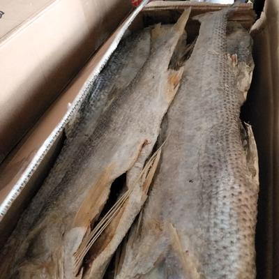 山东省滨州市沾化区大黄鱼 野生 6公斤以上