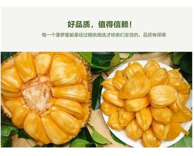 云南省文山壮族苗族自治州麻栗坡县越南菠萝蜜 10-15斤