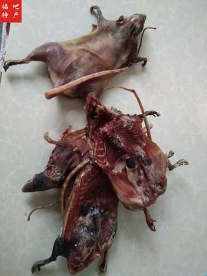 湖南省永州市宁远县老鼠斑 野生 0.5公斤以下 山鼠