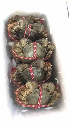江苏省常州市武进区洪湖螃蟹 2.0-2.5两 统货