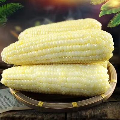 黑龙江省绥化市肇东市速冻玉米粒 东北特产速冻黏玉米,