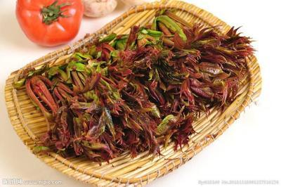 广西壮族自治区防城港市港口区红香椿芽 6cm以下
