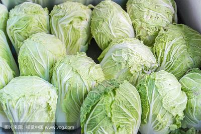 山东省聊城市临清市青麻叶大白菜 6~10斤 净菜