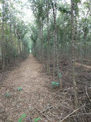 陕西省西安市碑林区皂角树