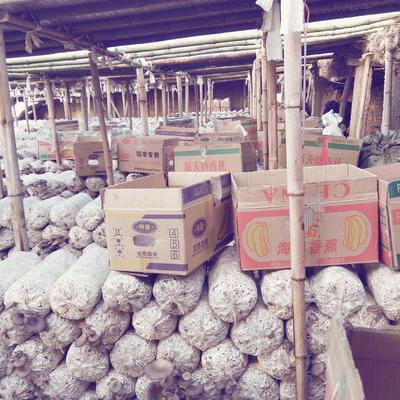 河北省邯郸市永年县蘑菇
